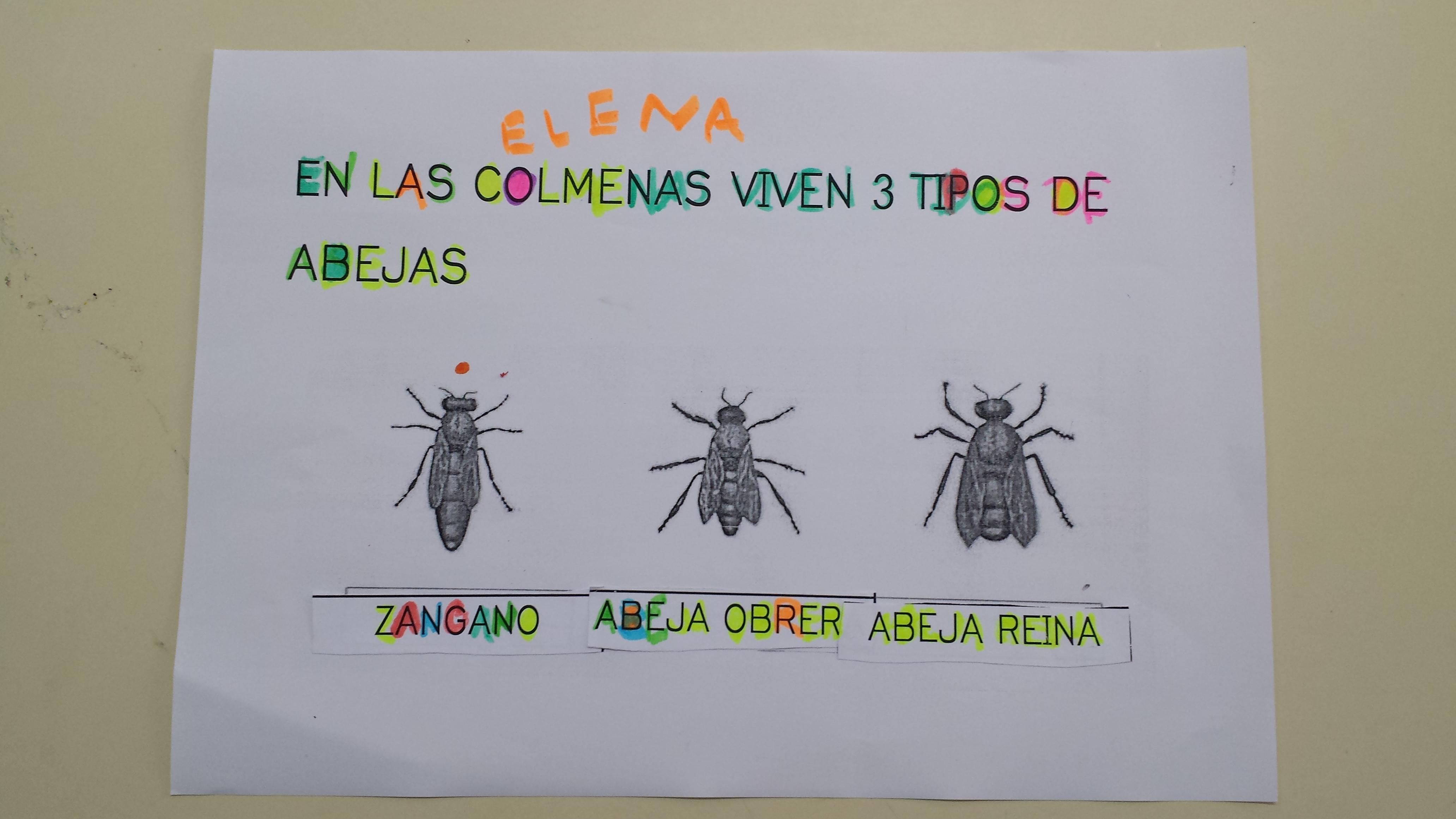 proyecto de las abejas para educación infantil |